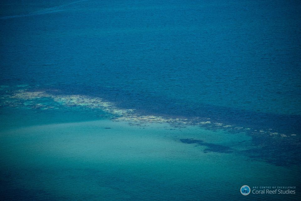 This Is What Climate Change Has Done To The Great Barrier