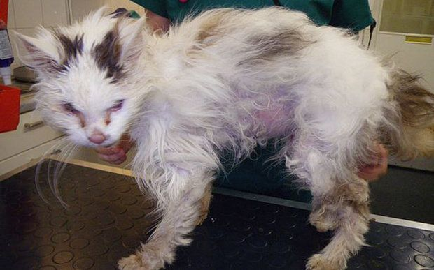 RSPCA 'Acted Unlawfully' By Putting Down Cat Against Owner's