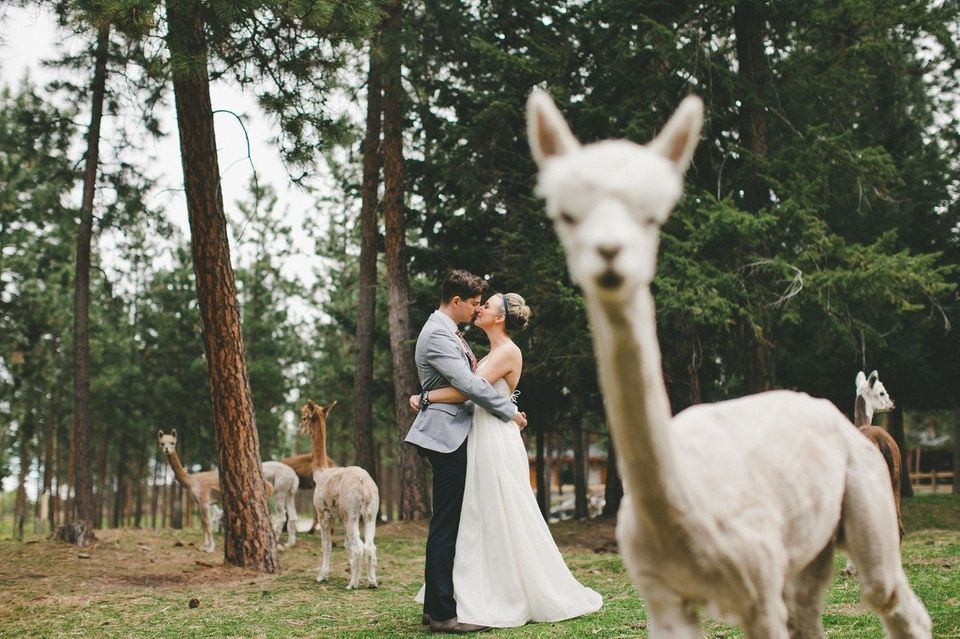 If this PDA doesn't stop,&nbsp;<i>alpaca</i>&nbsp;bag and leave.&nbsp;
