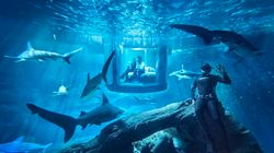 You Can Now Sleep Over In A Shark