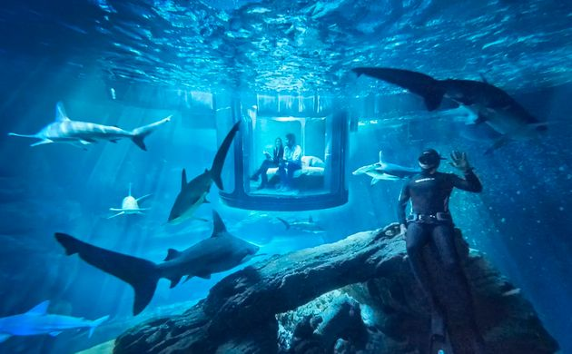 You Can Now Sleep Over In A Shark Aquarium (Thanks To