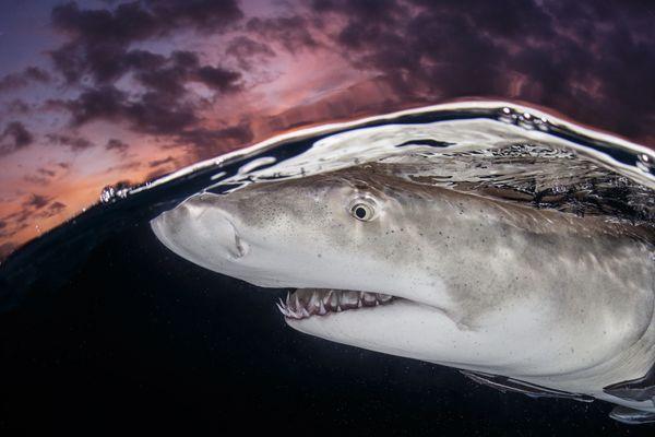 "<a href=""http://www.underwaterphotography.com/Members/Member-Profile.aspx?ID=43188"">Terry Steeley</a>,&nbsp;United Kingdom"