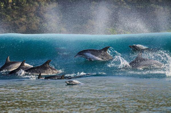 "<a href=""http://www.underwaterphotography.com/Members/Member-Profile.aspx?ID=35366"">Geo Cloete</a>,&nbsp;South Africa"