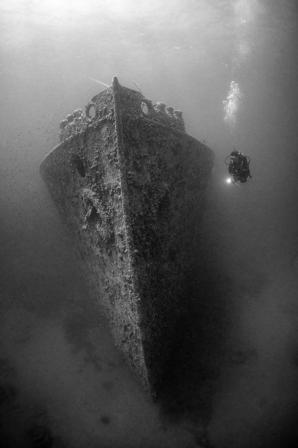 "<a href=""http://www.underwaterphotography.com/Members/Member-Profile.aspx?ID=37121"">Dmitry Vinogradov</a>,&nbsp;Russia"