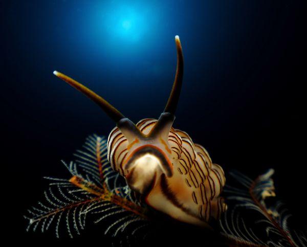"<a href=""http://www.underwaterphotography.com/Members/Member-Profile.aspx?ID=41751"">Ajiex Dharma</a>,&nbsp;Indonesia"