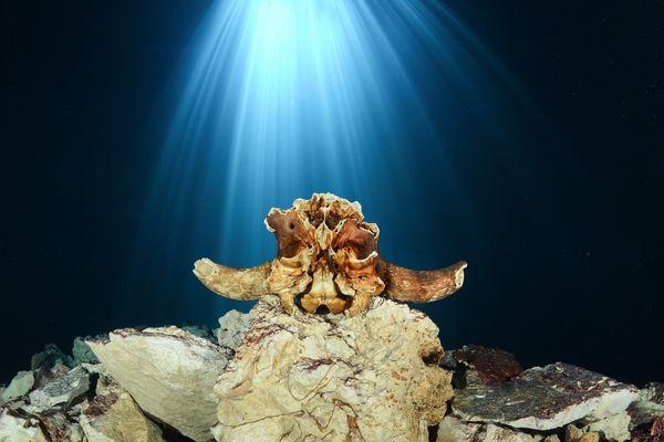 "<a href=""http://www.underwaterphotography.com/Members/Member-Profile.aspx?ID=27388"">Raoul Caprez</a>,&nbsp;Switzerland"