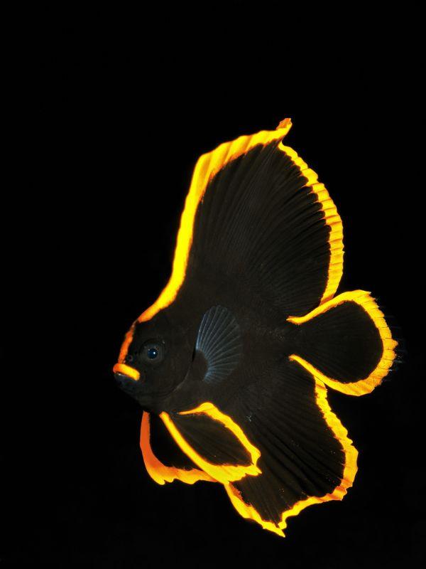 """<a href=""""http://www.underwaterphotography.com/Members/Member-Profile.aspx?ID=38368"""">Uwe Schmolke</a>,&nbsp;Germany"""