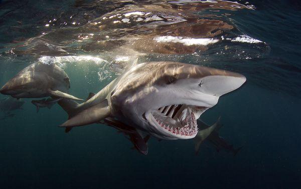"""<a href=""""http://www.underwaterphotography.com/Members/Member-Profile.aspx?ID=27507"""">Allen Walker</a>,&nbsp;South Africa"""
