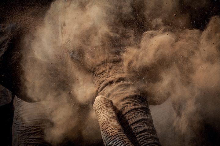 An elephant in a cloud of dust.