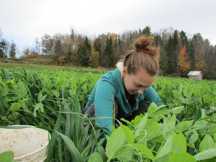 Many Sterling students work on the college's farm and gardens, which produce about 20 percent of its food.