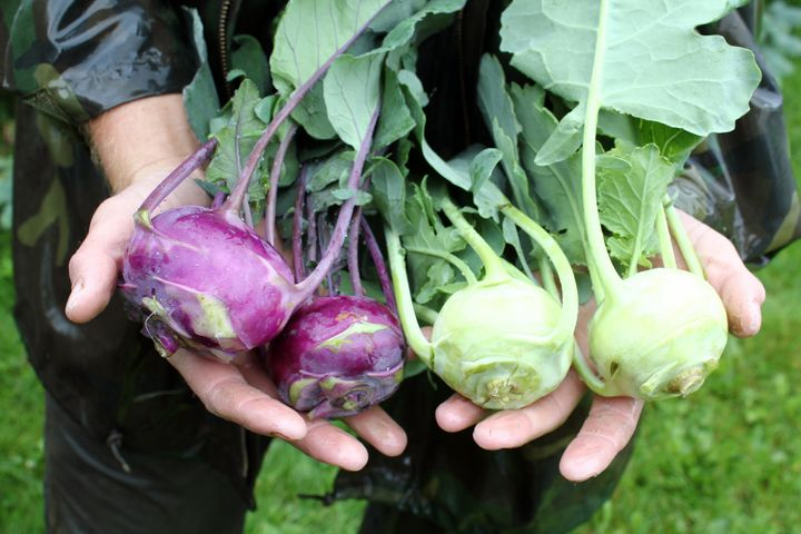 Some 60 vegetable crops are grown at Sterling.