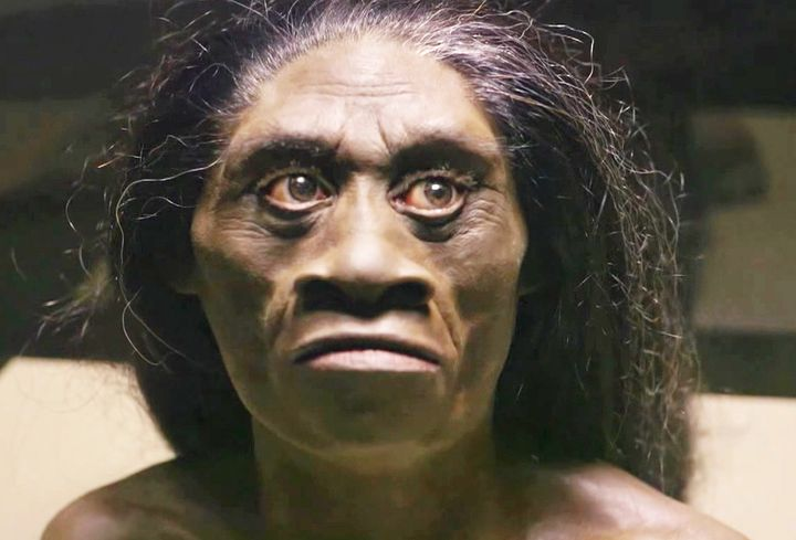 """A reconstruction sculpture of a """"hobbit"""" head. The species, Homo floresiensis, is an extinct human relative from the Liang Bua cave on Indonesia's Flores Island."""