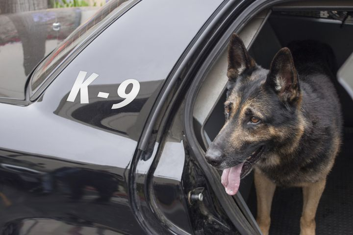 """A woman who was bitten by a police dog (not pictured) while sleeping in her office is back in court after her lawsuit challenging the San Diego's police department's policy of training dogs to """"bite and hold"""" suspects."""