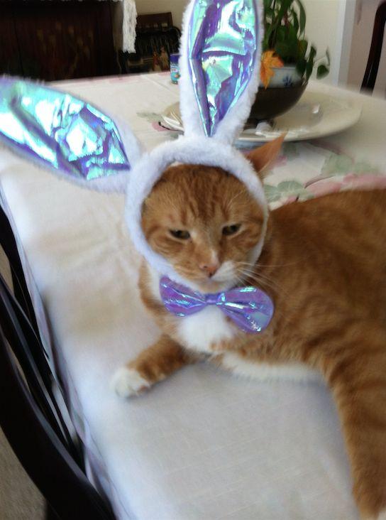 MushMush begrudgingly celebrates Easter.