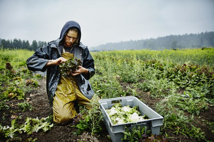 The U.S. has certified 21,781 organic growers since 2002, according to the USDA.