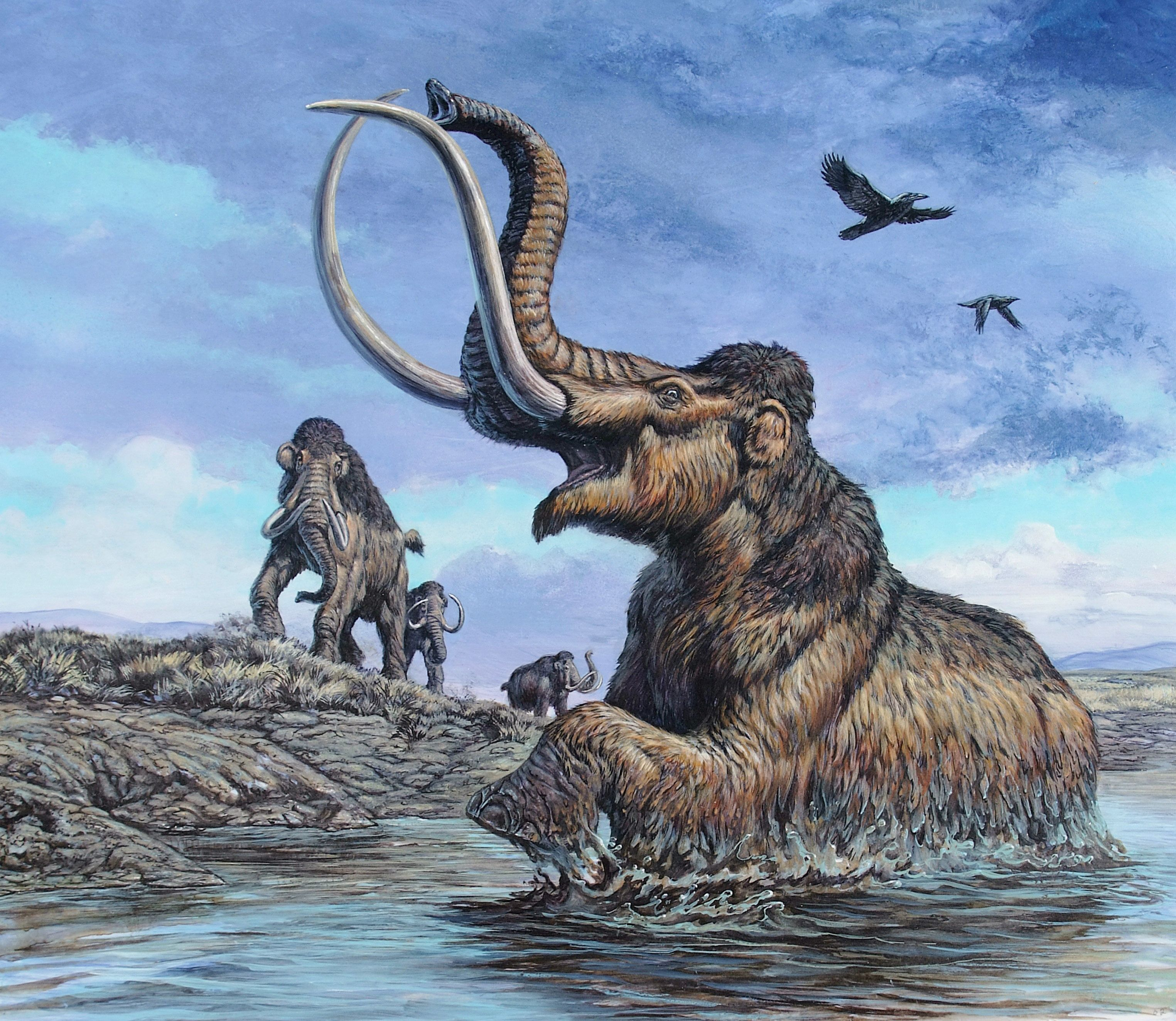 An artist's depiction of a Columbian mammoth. Last month, a bulldozer operator stumbled upon a Columbian mammoth skull while