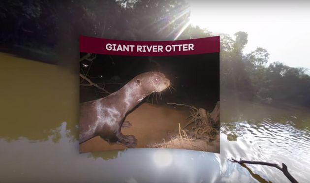 Scientists can use the virtual reality footage to map habitats