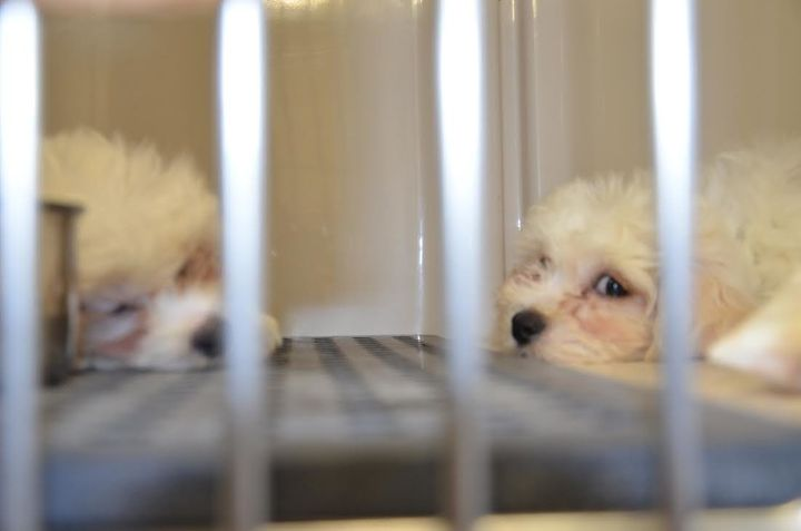 Two puppies that police say they removed from a vehicle that was left parked overnight amid freezing temperatures.