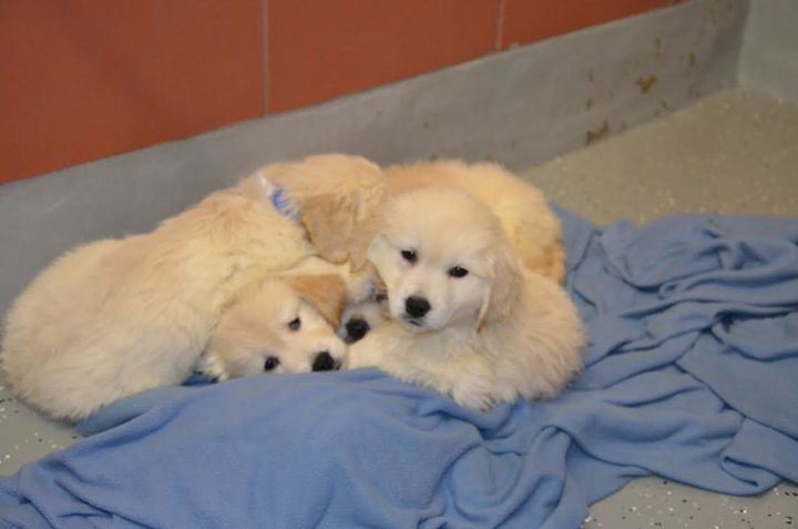 Several puppies are seen curling up together after police say they were taken from a van Monday.