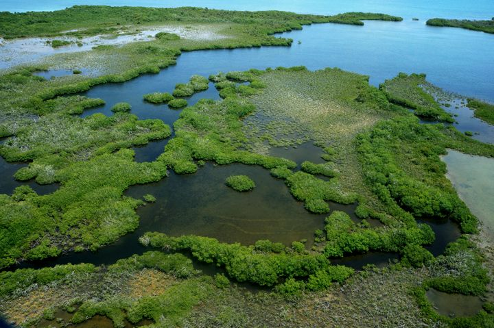 Belize has lost nearly 12,500 acres of mangrove cover around the Belize Barrier Reef Reserve System due to development.