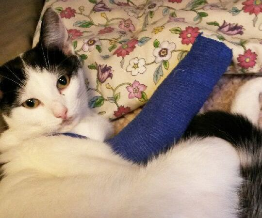 Horny Cat Ends Up With Broken Leg After Jumping Four Storeys To Get