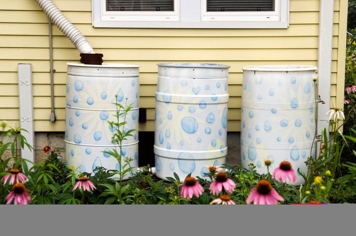Barrels can collect rainwater flowing from a home's downspout. A Colorado State University analysis found such barrels' impac
