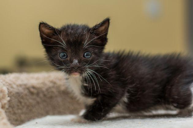 フロリダ州のゴミ処理場職員、ゴミの中から子猫を救う