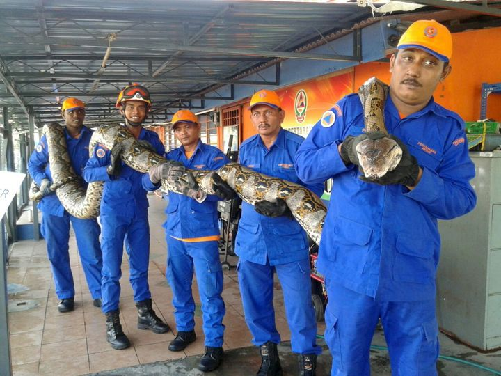 Members of Malaysia's civil defense force pose with the python.