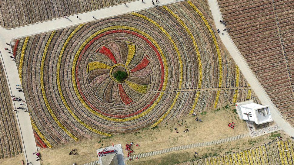 Atulip field in Zhumadian, Henan province.
