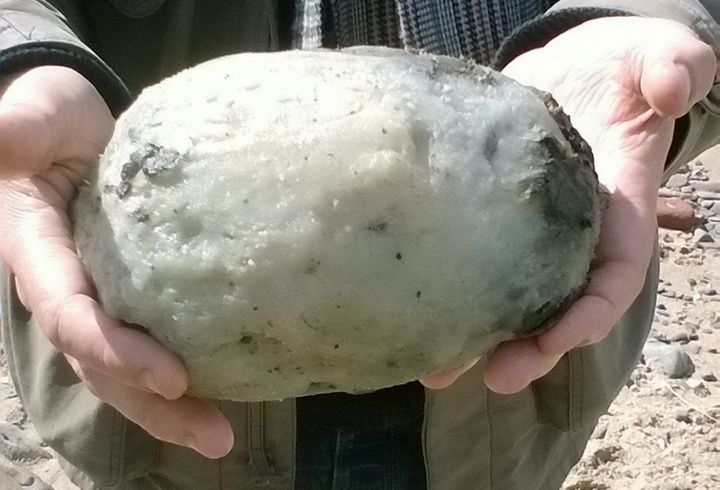 This egg-shaped whale vomit is worth big money.