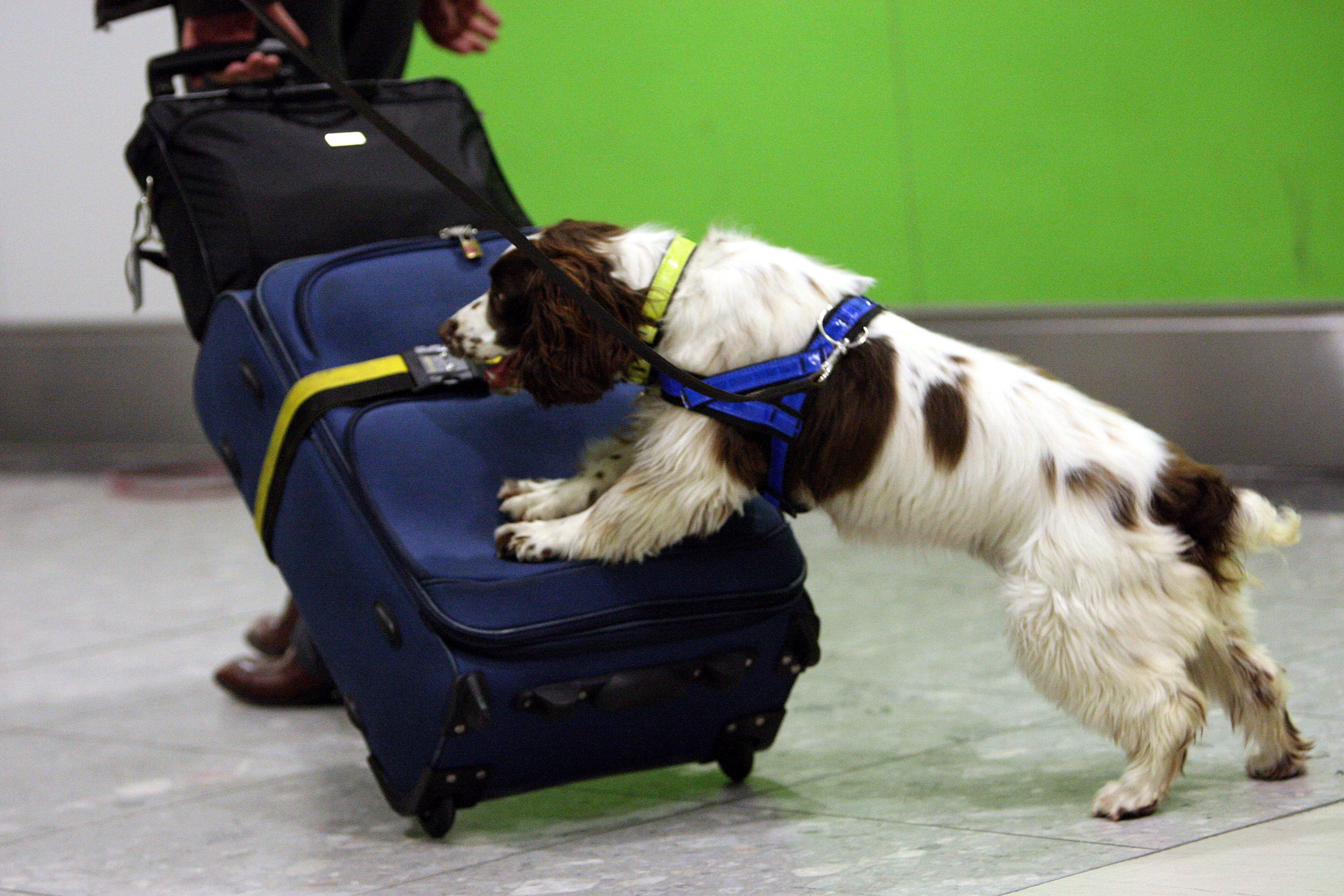 Some Airport Sniffer Dogs Much Better At Finding Sausages
