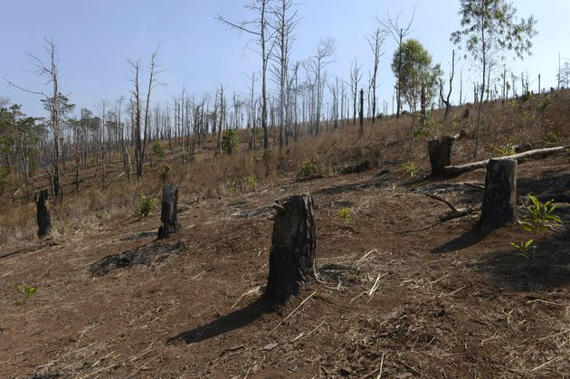 A deforested hill in Vietnam's central highlands' province of Dak Lak.Localoutlets saymassive...