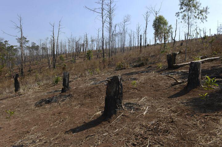 A deforested hill in Vietnam's central highlands' province of Dak Lak.Localoutlets saymassive migration int
