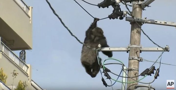 Chacha holding on to an electrical wire before he falls into a blanket held by workers on the scene.