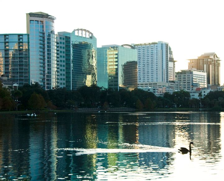 Swans have graced the downtown Orlando lake since the 1920s. Today they receive an annual medical checkup and are microchippe