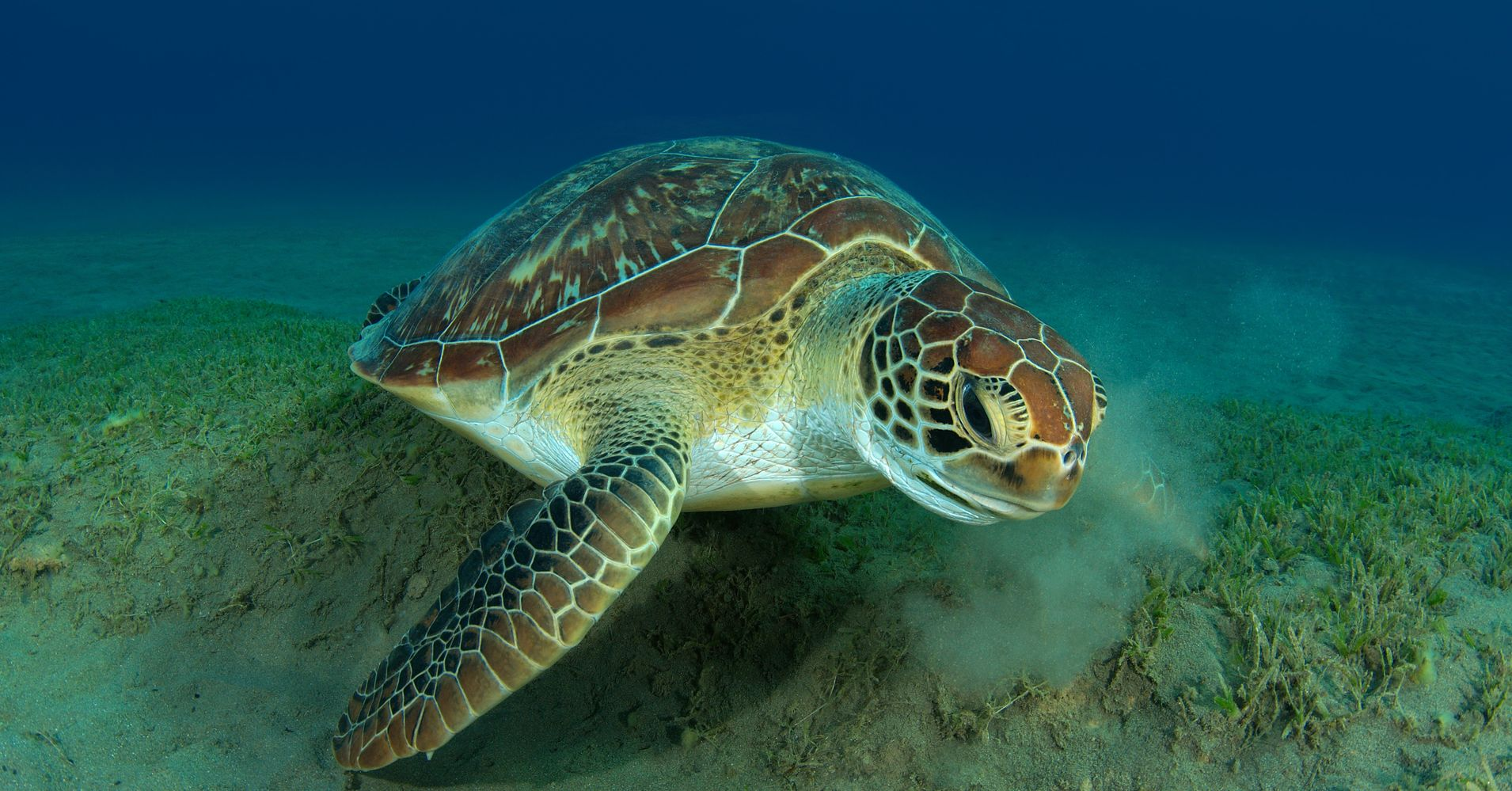 Some Green Sea Turtles Can Now Wave Goodbye To Their ... - photo#27