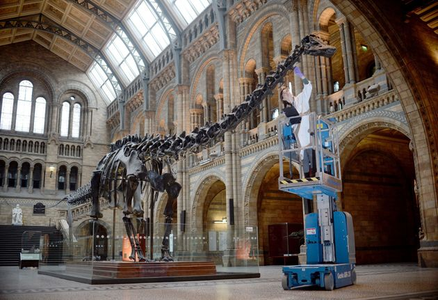 The diplodocus were some of the first to start dying out as early as 50 million years before the meteor
