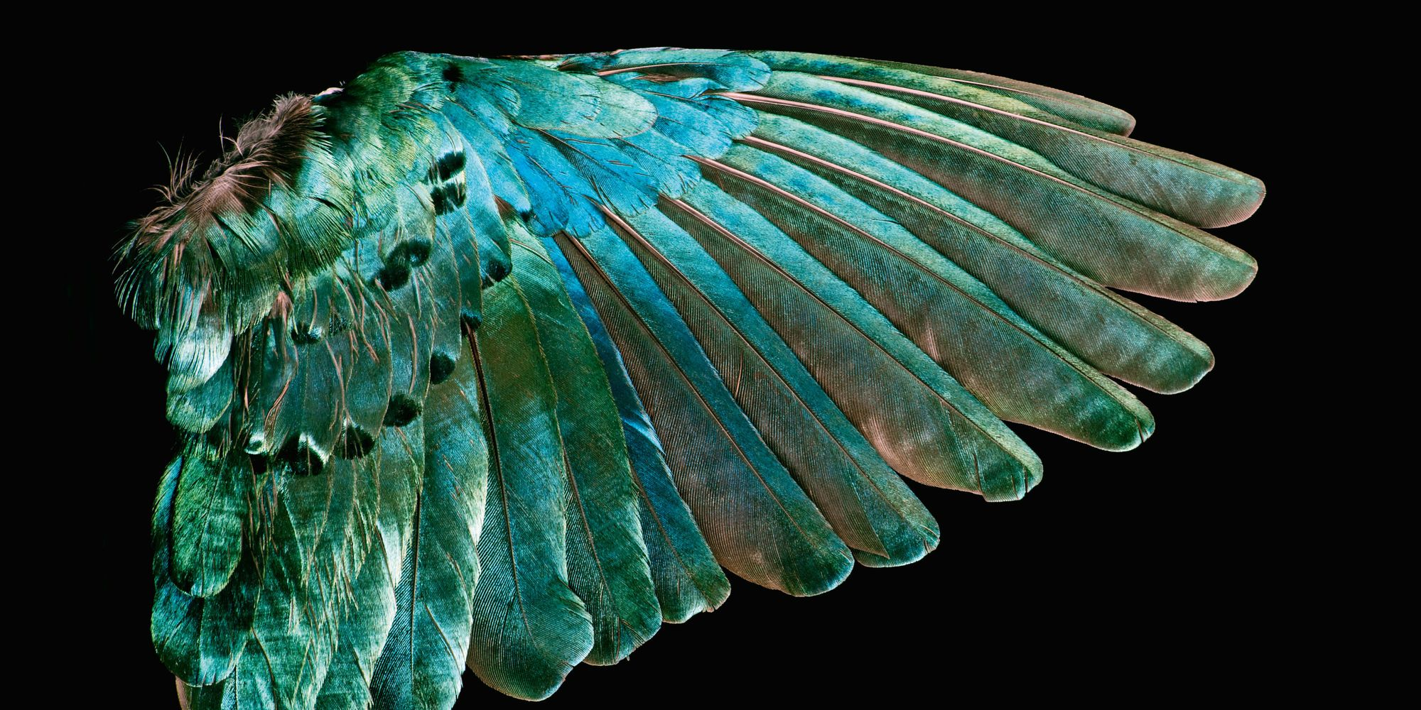 Hypnotic Book Surveys The Natural Beauty Of Wild Bird ... - photo#34