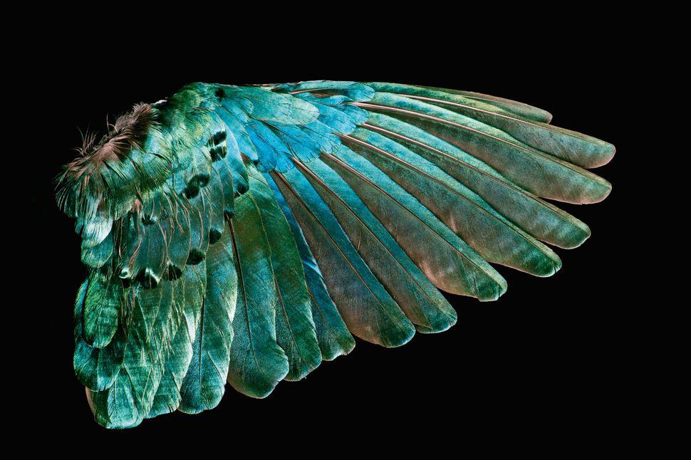 """Résultat de recherche d'images pour """"feather birds"""""""