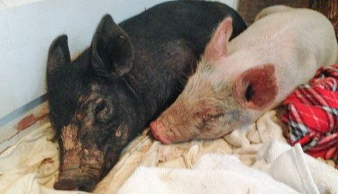 Anna and Maybelle after they were rescued.