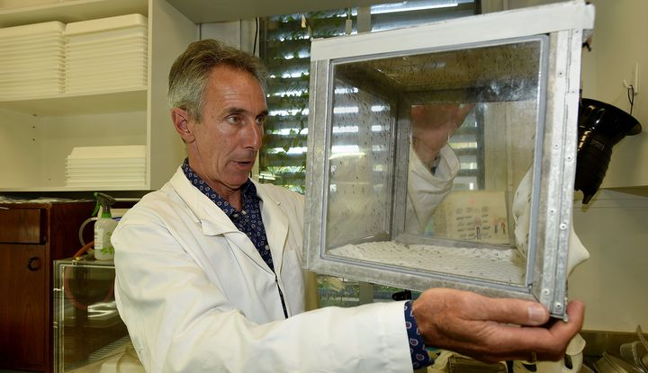 University of Melbourne professor Geoff McFadden checks a colony of mosquitoes.