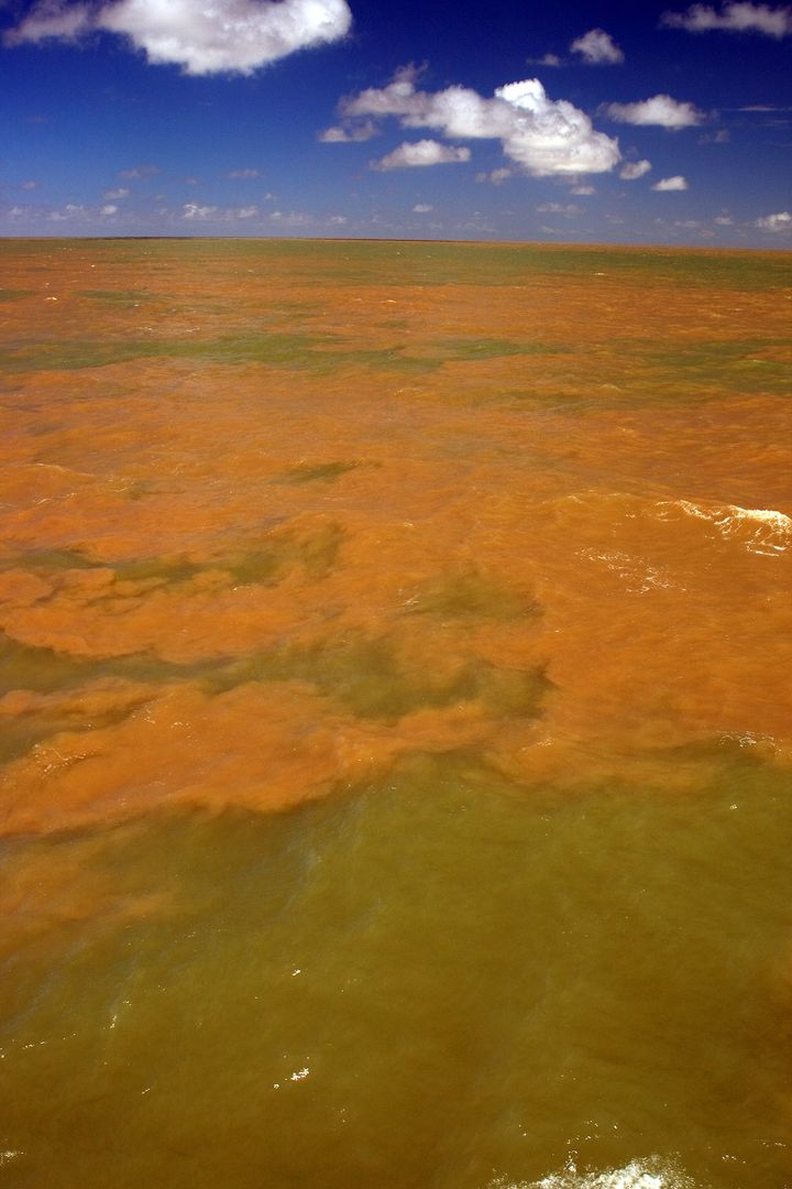 The plume where the water from the Amazon River meets the water of the Atlantic Ocean.