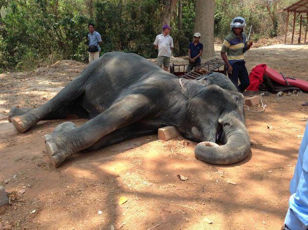 Image result for angkor wat elephants