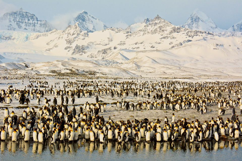 "Title: <strong>Peaks & Penguins in Antarctic Sunrise   </strong><br><br>""Stunning peaks and thousands of K"