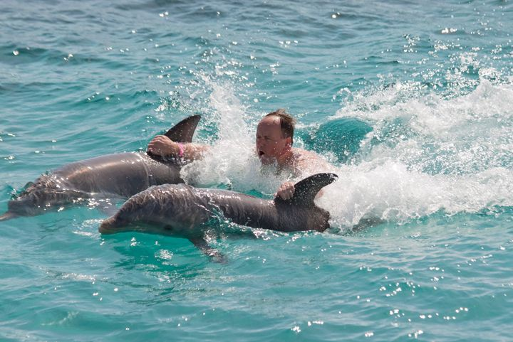 """Dolphins -- as oceangoing mammals -- are NOT meant to spend their precious lives in the desert,"" the petition says."