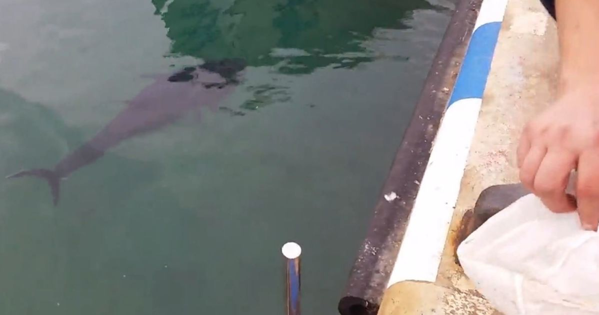 Fish Swallows Seagull By Accident, Doesn't Like The Taste