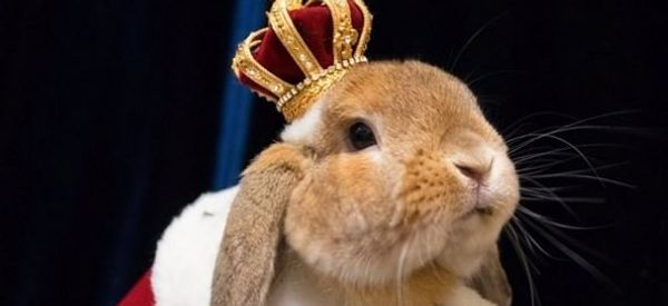 PuiPui Is The Best Dressed Rabbit On Instagram