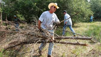 CRAWFORD, TEXAS - AUGUST 9:  U.S. President George W. Bush clears cedar at his ranch August 9, 2002 in Crawford,Texas. Bush is working from his 1,600-acre  ranch in Texas for about a month.  (Photo by Eric Draper/White House/Getty Images)
