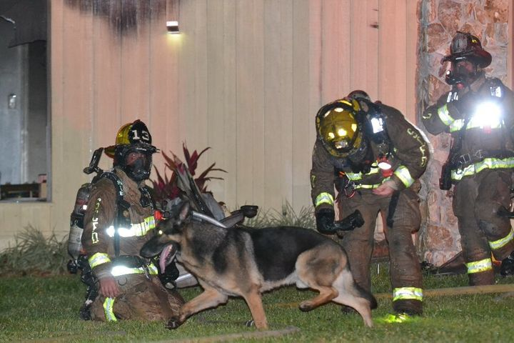 A German shepherd named Maxx is seen with firefighters after a fire destroyed his owner's home Monday night.
