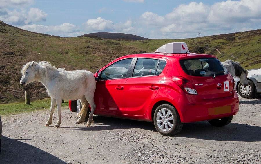 Horse Caught Scratching Its Bum On Car Wing